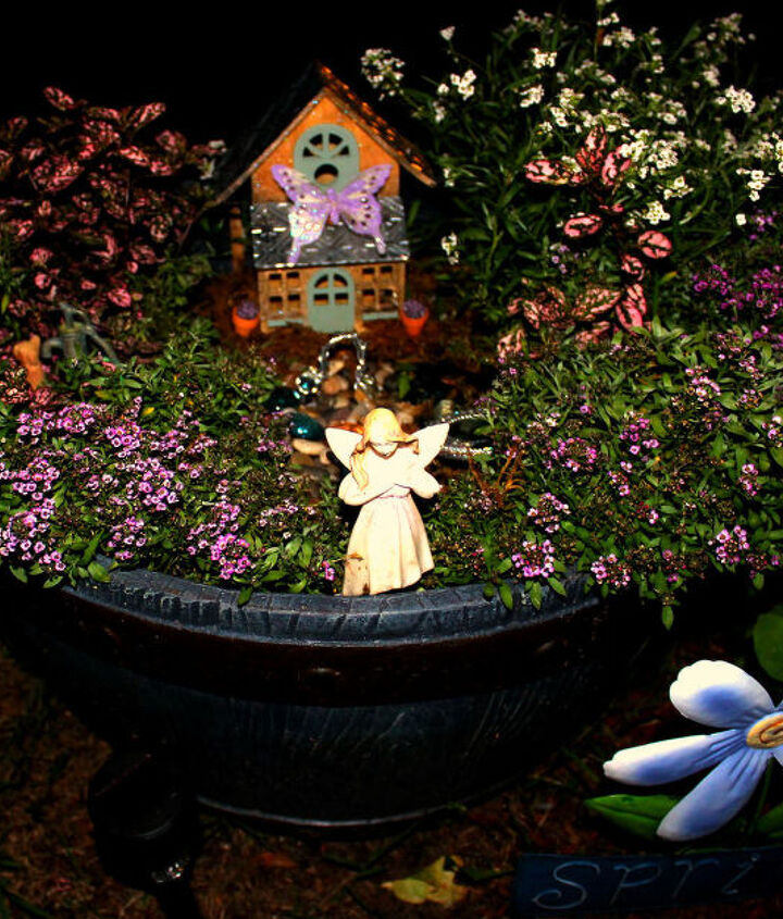 bloomed fairy garden!