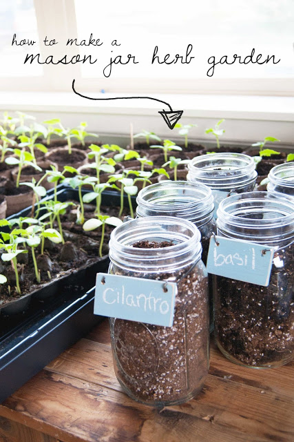 mason jar herb garden, gardening, mason jars, repurposing upcycling