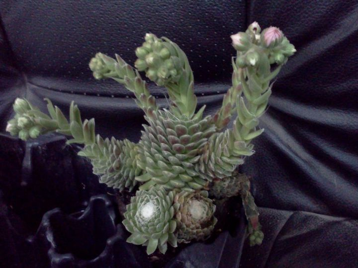 alien or chick, gardening
