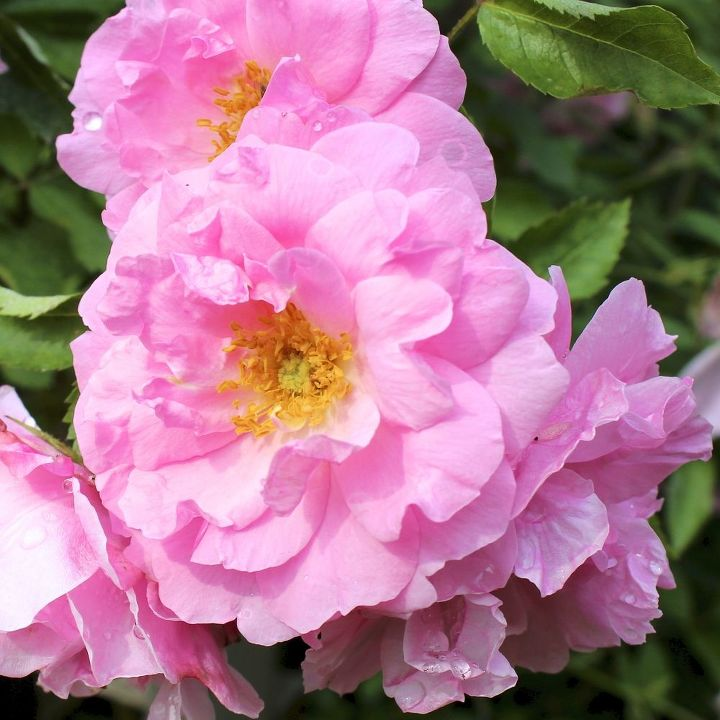 gardening tips summer august tasks, flowers, gardening