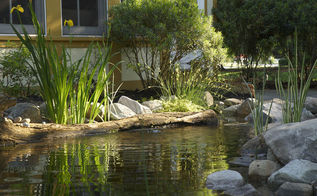 backyard ideas pond fish koi ecosystem, landscape, ponds water features