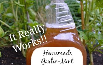 A DIY Organic Garden Insect Spray That Works!