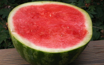 How Are Seedless Watermelons Grown?