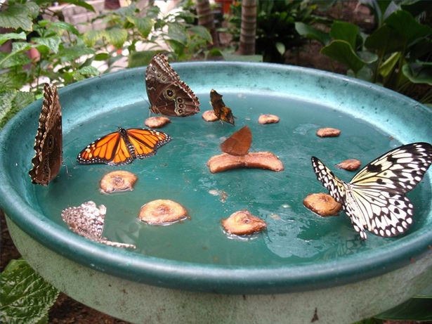 "First, prepare ""butterfly food"" by mixing nine parts water with one part sugar. Depending on the size of your jar, you'll use either a tablespoon or a teaspoon."