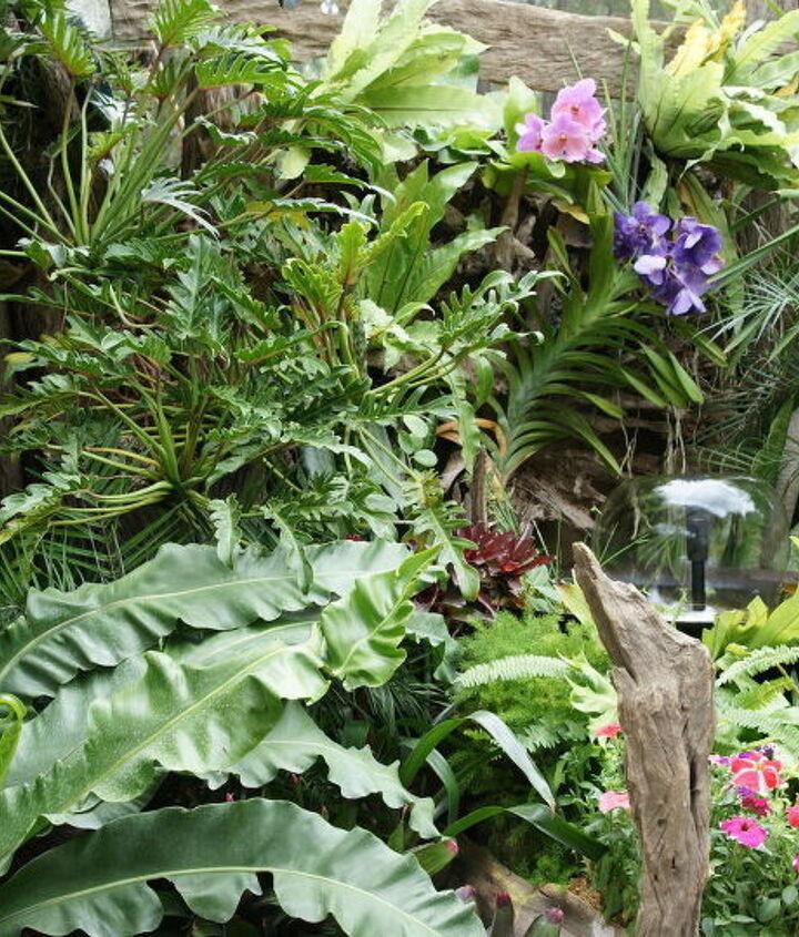 blue vanda anyone, flowers, gardening