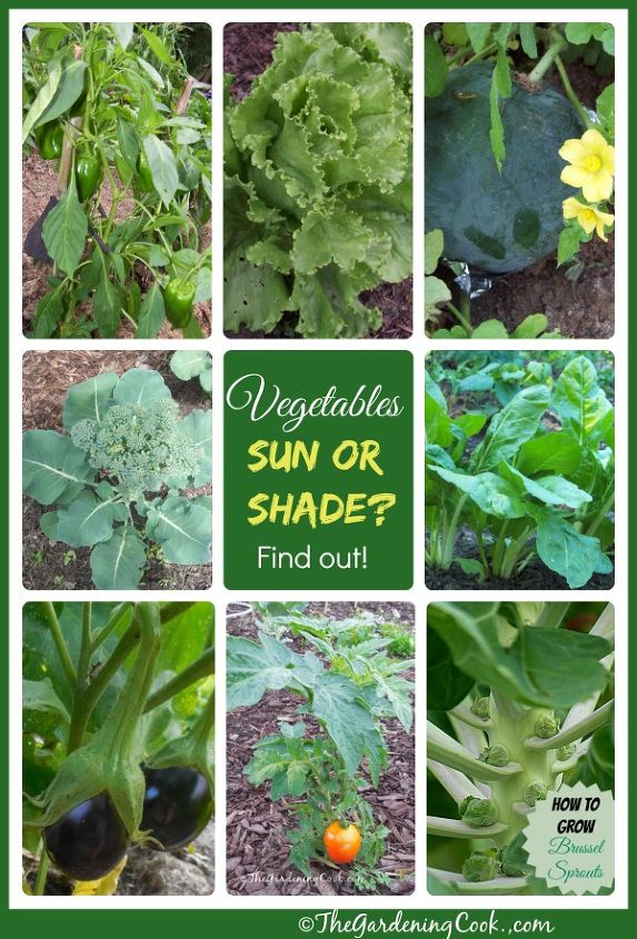 How much sunlight vegetables need hometalk for How much sun does a garden need