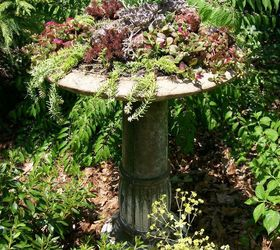 Making A Succulent Garden In An Old Birdbath, Container Gardening, Flowers,  Gardening,