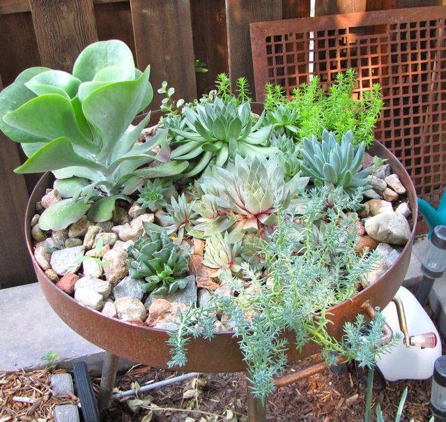 succulent gardening, flowers, gardening, repurposing upcycling, succulents, Now