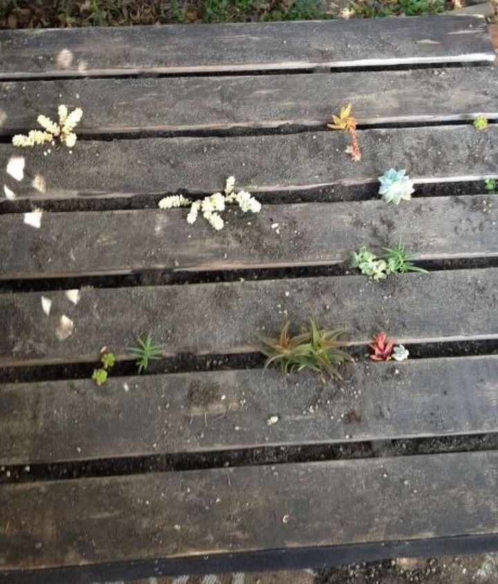 pallet vertical succulent garden, flowers, gardening, pallet, repurposing upcycling, succulents