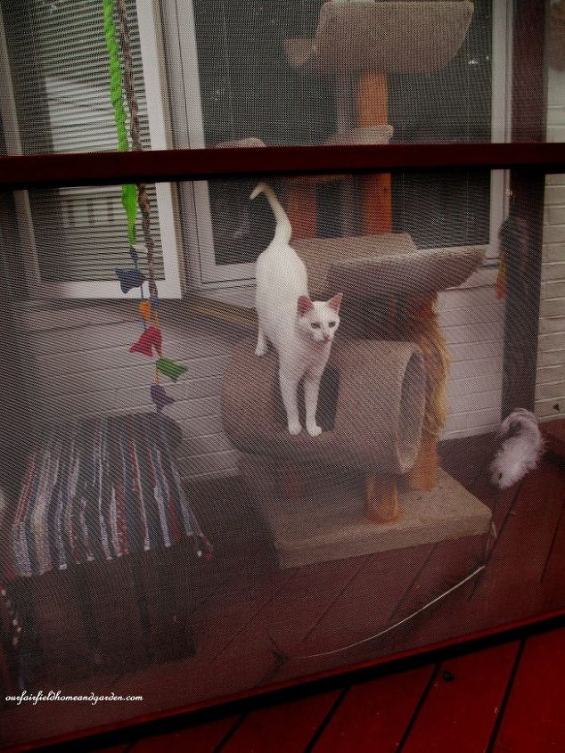 Very best Build A Catio ~ a Tiny Screen House for Kitty Cats! | Hometalk VO26