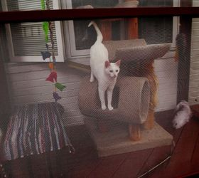 Build A Catio A Tiny Screen House For Kitty Cats, Decks, Diy, Patio