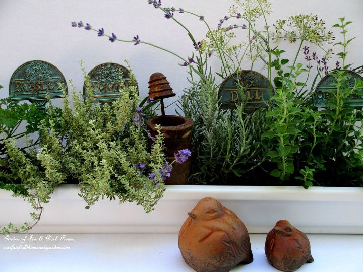 Parsley, Thyme, Lavender, Dill & Oregano