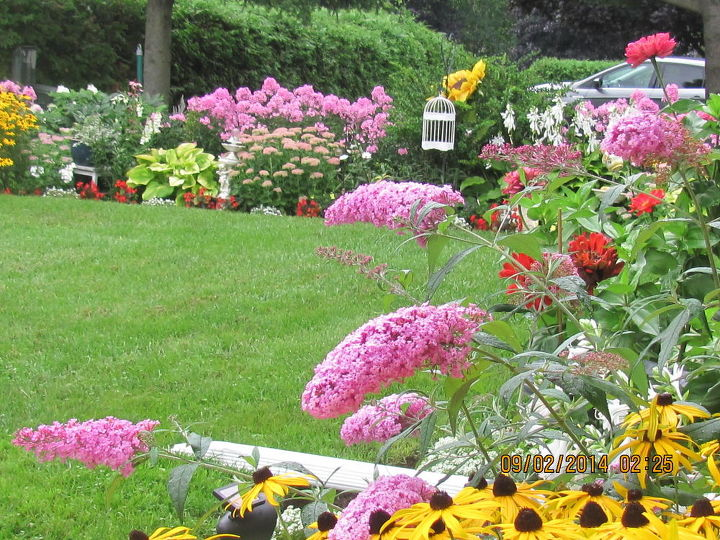 gardening flowers backyard full bloom summer canada, flowers, gardening