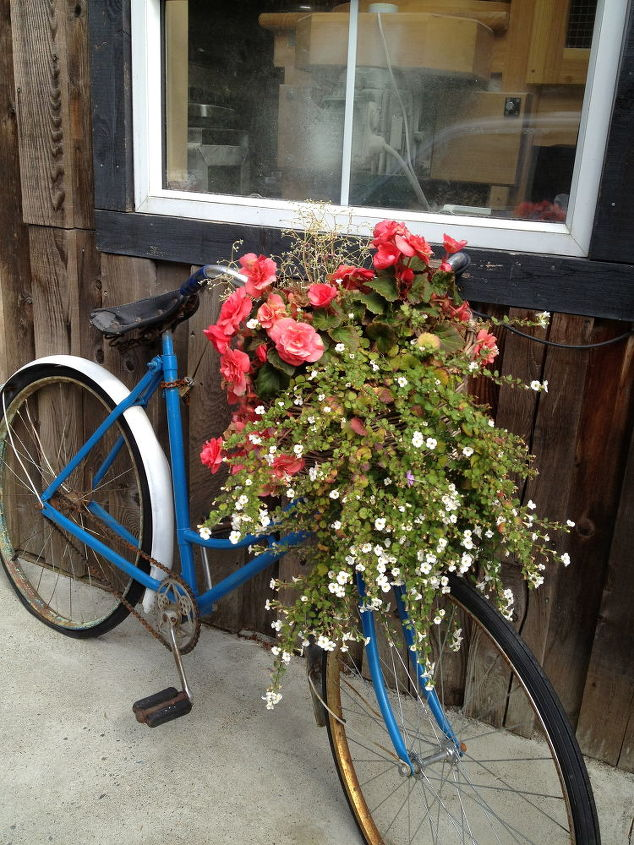 Bike basket stuffed with annuals...there's several of these bikes parked all around the store front of a great bakery in Cowichan bay.