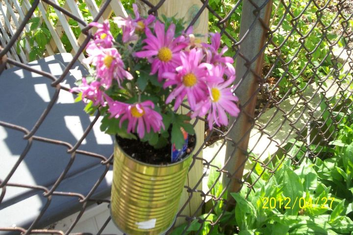 This is a pic of a reused tin can I made into a flower pot to hang on the fence to dress it up abit