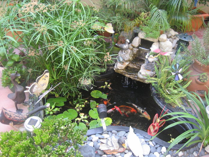 this is my small koi pond