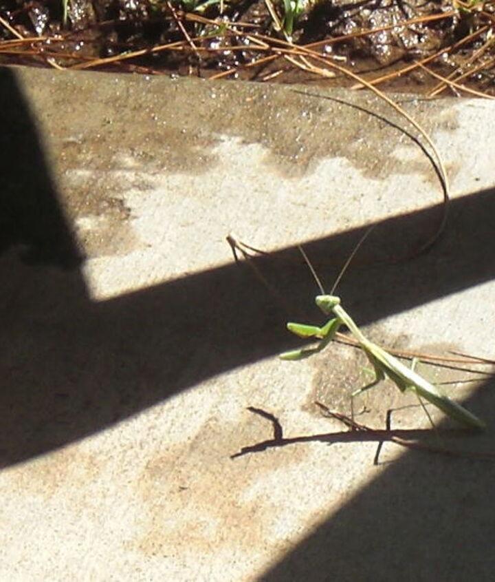my morning visitor, gardening, wildlife animals