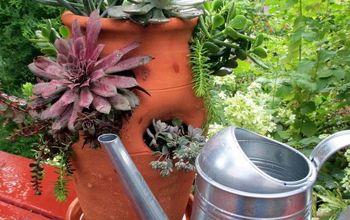 Plant a Succulent Garden in a Strawberry Pot