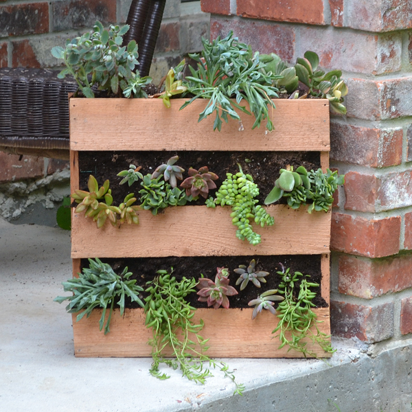Cedar Succulent Pallet Planter | Hometalk