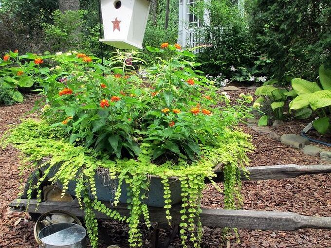 my wheelbarrow planter, gardening, repurposing upcycling, I planted this wheelbarrow with two kinds of Lantana and Creeping Jenny for a sunny spot in the side yard See more at or