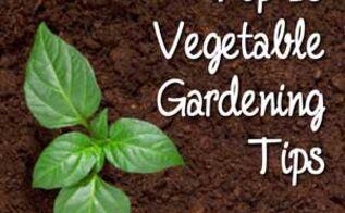 top 10 vegetable gardening tips, container gardening, gardening
