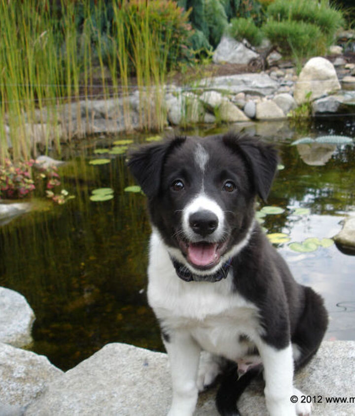 Brody as a puppy by the pond his dad built for him.
