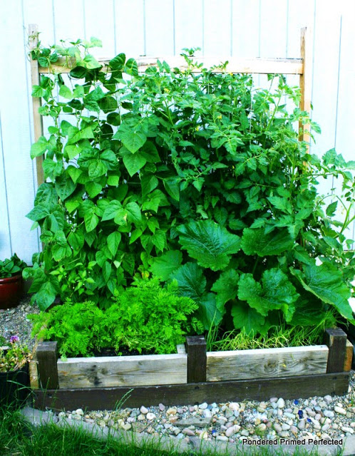 old bed frame repurposed as a raised garden bed, gardening, raised garden beds, repurposing upcycling, woodworking projects, Look at our garden grow