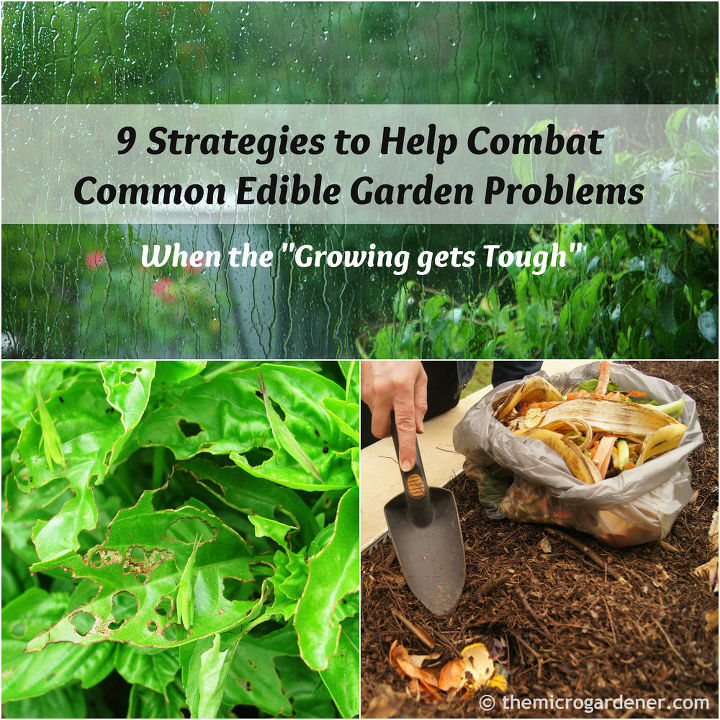 9 strategies to help combat common edible garden problems, composting, container gardening, gardening, homesteading, pest control