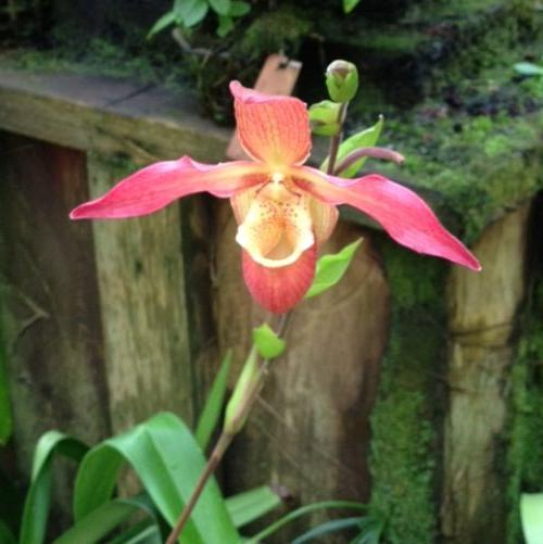 1. I know this one - I was so fascinated with it - it's a ladyslipper orchid!