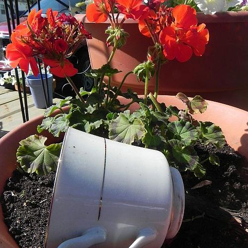 """add a touch of whimsy, several people pick up my cup that I """"forgot"""" outside- not realizing it is an eye catching trick"""