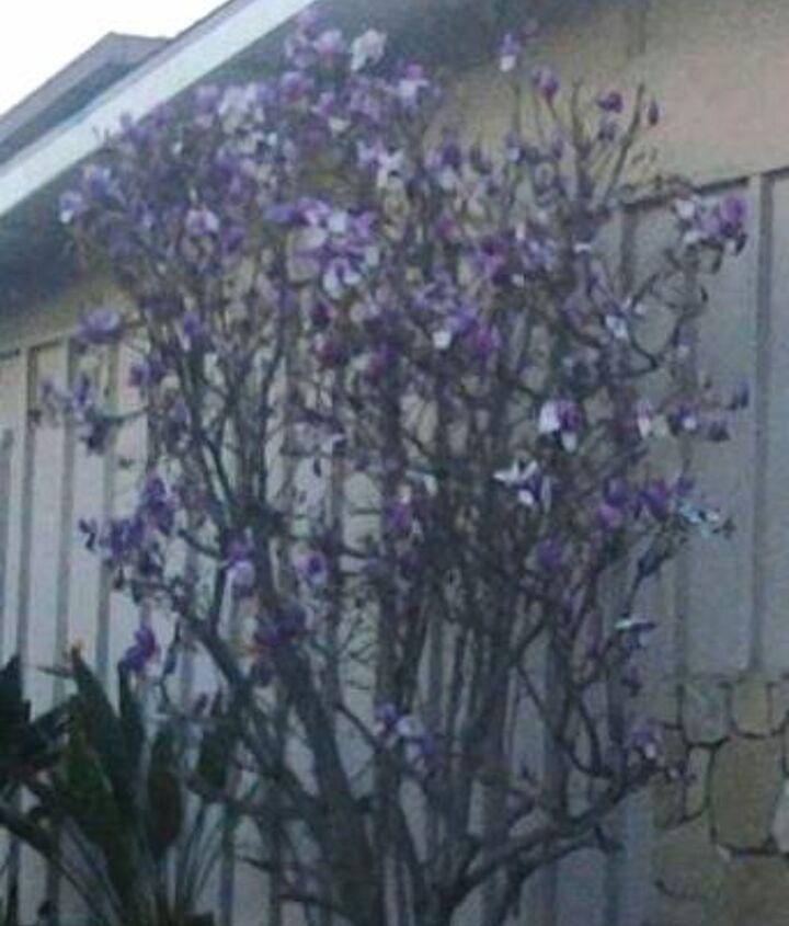 mystery flowering tree