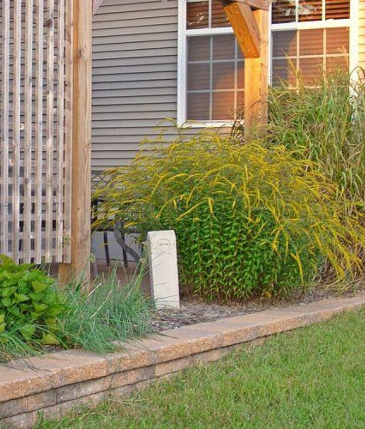 Here's the unruly grasses (next to Goldenrod) at their worst last Fall 2012! They had to go!