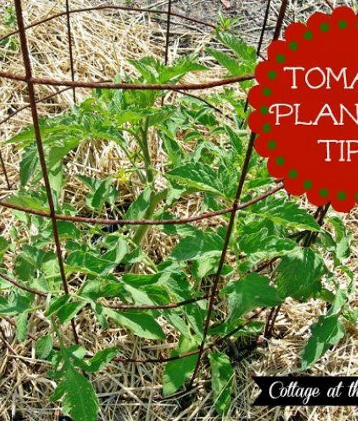 Our tips will guarantee you success with growing tomatoes this year!