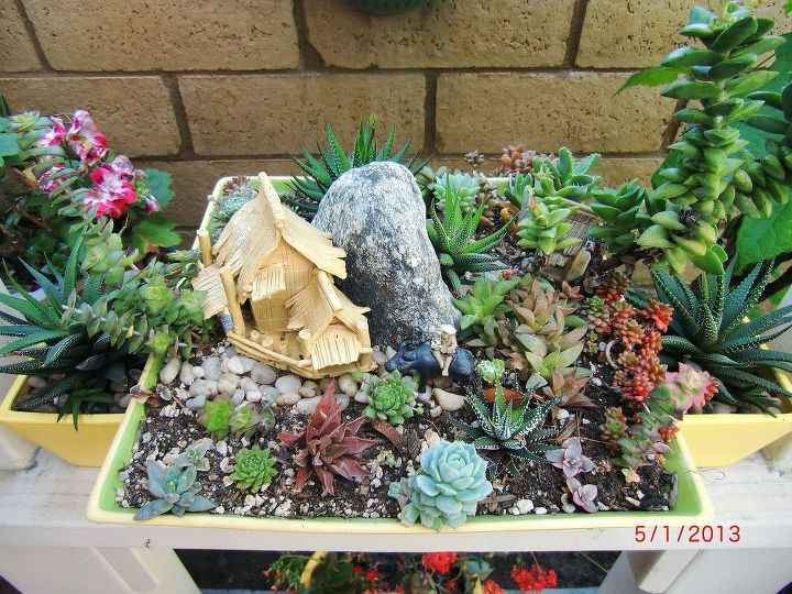 my mini succulent garden on the pot with rural asian village setting, flowers, gardening, succulents, my mini succulent garden on the pot with rural asian village setting