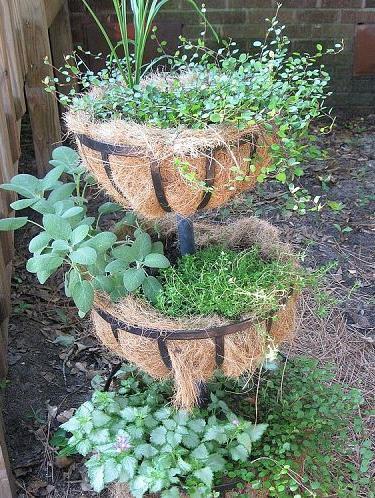 herb container garden, container gardening, gardening