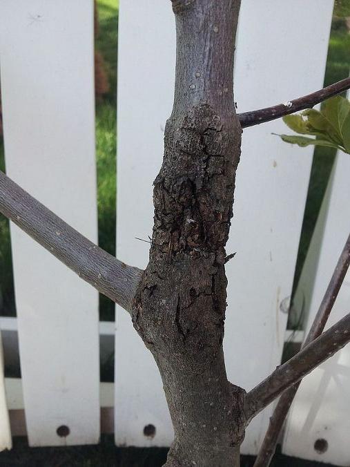 what s this tree crust, gardening