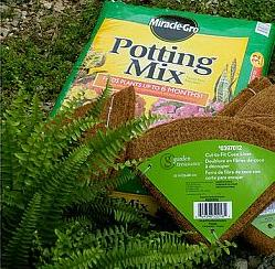 how to have hanging ferns that are the envy of the neighborhood, flowers, gardening, My first secret is to remove the plastic pot they come in and replant them using a good quality potting mix