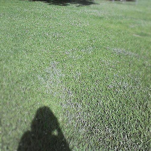 q black film, gardening, landscape