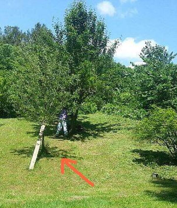 apple tree with severed trunk, gardening