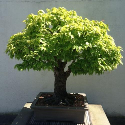 The next few bonsai trees are from another exhibit. Aren't they amazing?