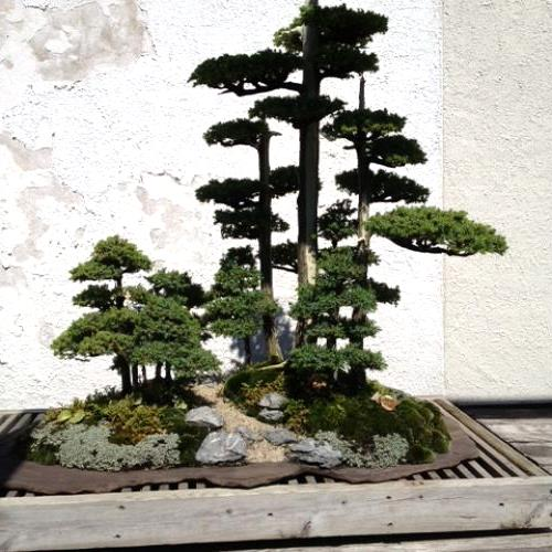 A mini forest.