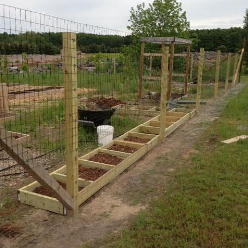 more gardening 2013, gardening, Tomato beds getting ready to be planted Also shows our revamped garden fence to keep deer and rabbits out