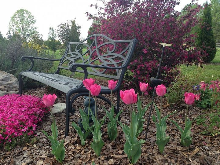 Adding some new pics.  These are some tulips beside the pond along with the pink creeping phlox you see to the left and a beautiful loropetalum to the right. Spring 2013