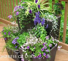 One Colour For The Containers, A Theme For The Plants, Varying Heights: Bam