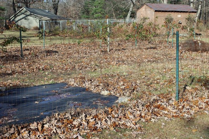 permaculture method garden in process at the small house, gardening, homesteading, landscape, The traditional fenced in vegetable garden Maple leaves are brought in each fall to enrich and amend the soil