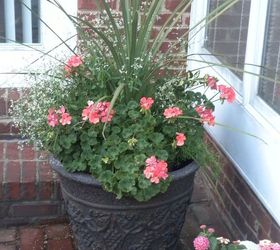 Plan Now Annual Flower Containers, Container Gardening, Flowers, Gardening,  Dracaena Geraniums Diamond