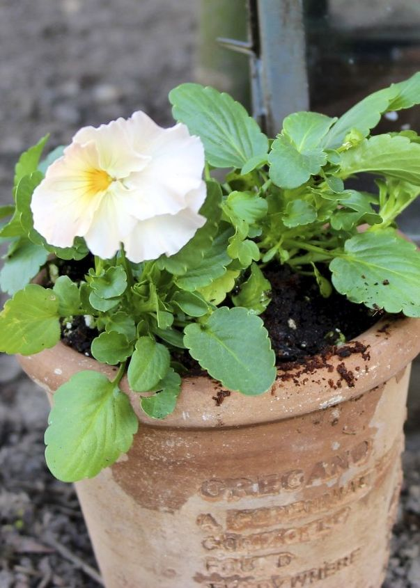 Even something so simple as an interesting terra cotta pot stuffed with pansies adds some spring charm to your front steps.