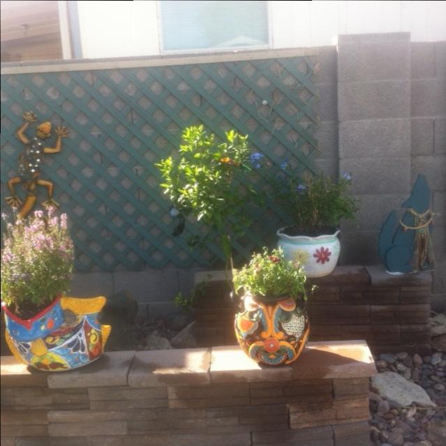 My Backyard In Arizona Hometalk