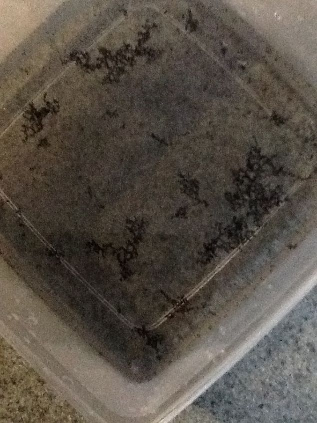 q black stuff in home water supply, home maintenance repairs, how to, plumbing