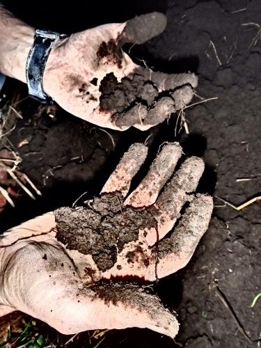 the hope that lives in black soil, gardening, green living, homesteading